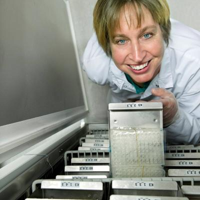 Kristina Duvefelt, Sektionschef på MAF